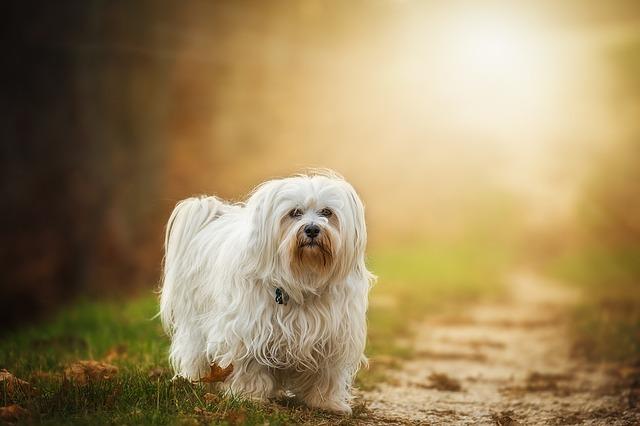 dog-1134492 640