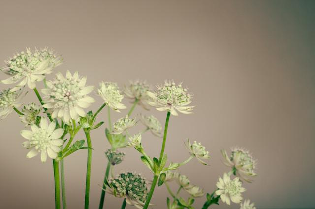 flowers-69810