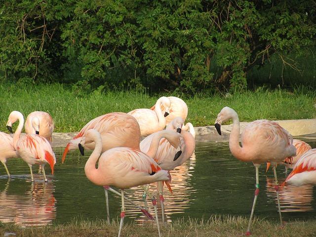pink-flamingo-1070604 640